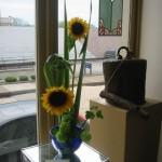 Sunflower Michiko 640